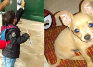 Niño perdió a su perro y ofrece como recompensa su play y sus juguetes