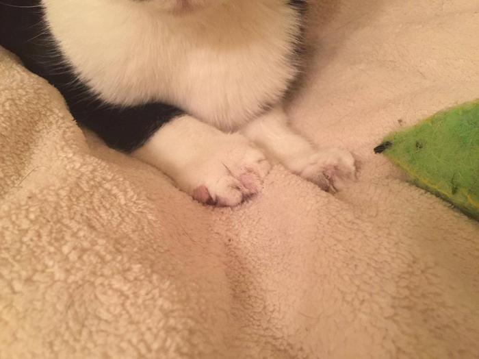 No corte las garras de su gato