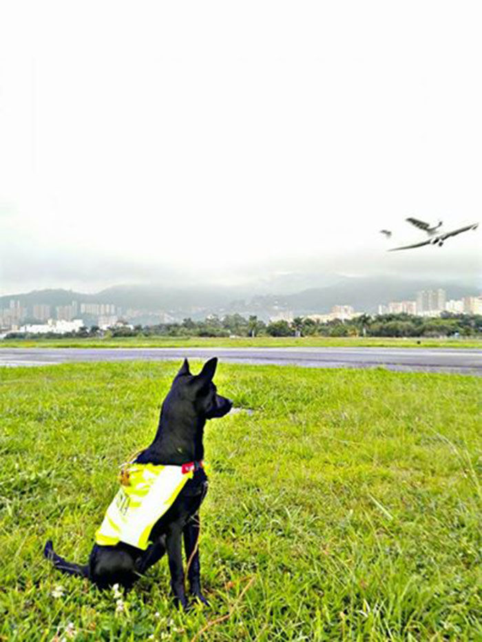 Oficial de peligro aviario