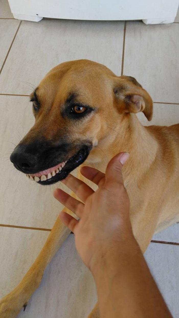 Pandora encontró una prótesis dental