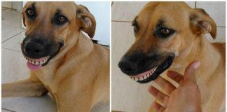 Pandora perra con una peculiar sonrisa