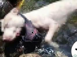 Perra fue encontrada ahogada en Copacabana, la amarraron con piedras