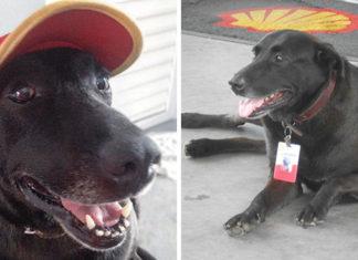 Perro abandonado en estación de servicio tiene trabajo