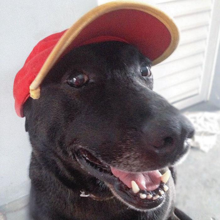 Perro abandonado en estación de servicio