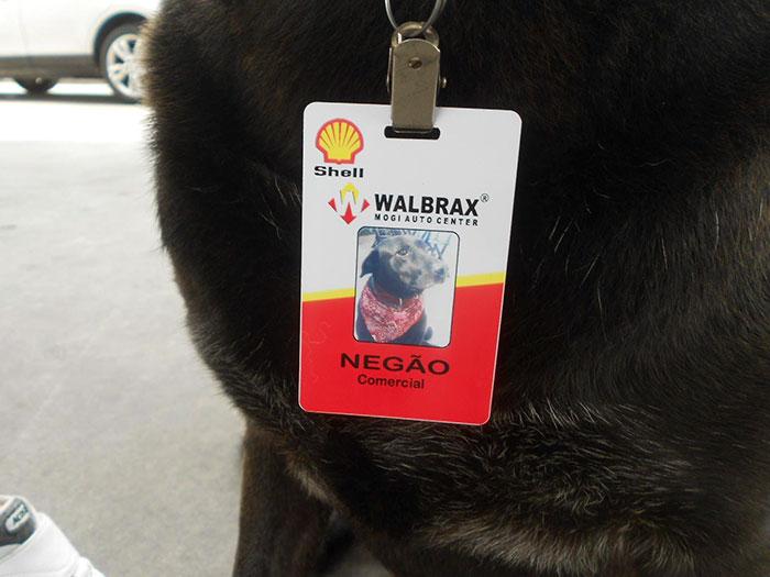 Perro empleado en estación de servicio