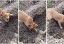 Perro entierra a su hermano
