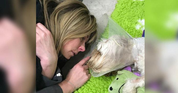 Perro falleció del STT tras lamer un contenedor de reciclaje contaminado