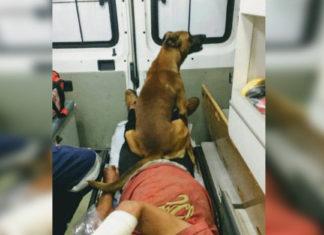 Perro fiel acompañó a su amigo en la ambulancia y lo esperó en el hospital