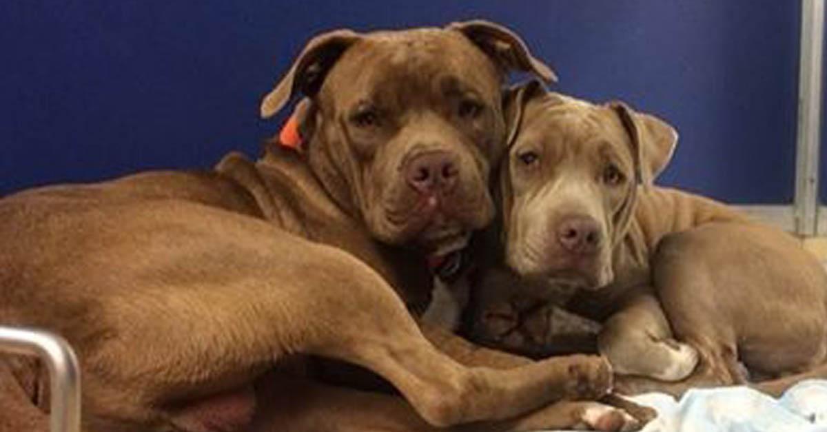 Par de perros sin hogar se hacen compañía en el refugio, son muy adorables