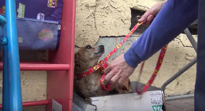 Princess fue rescatada por la organización Hope For Paws