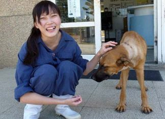 Queda prohibido el sacrificio de animales sin hogar en Taiwan