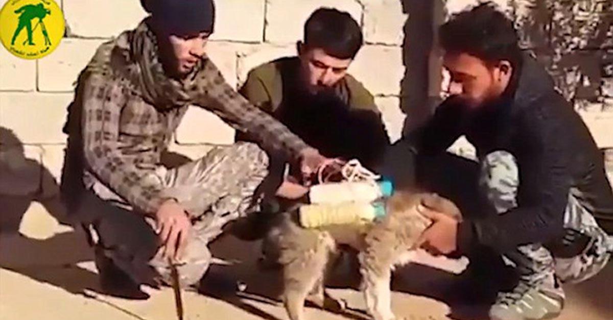 Salvaron la vida de un perro al que le amarraron a un cinturón suicida