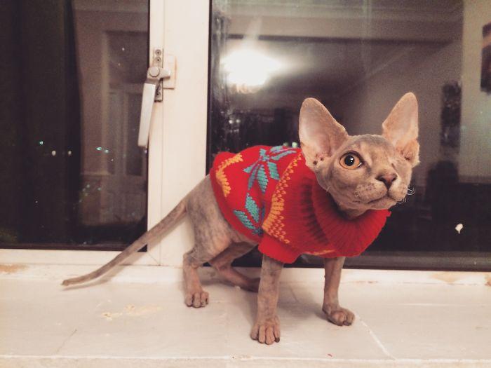 Stitch es una gata tuerta, pero encantadora