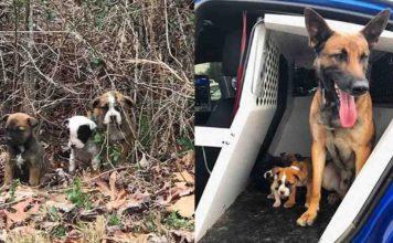Agente canino K9 ayudó en el rescate de tres cachorros abandonados