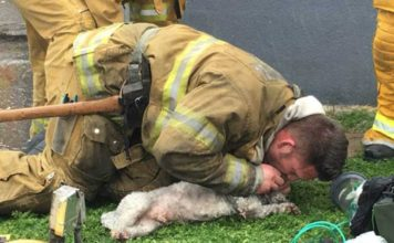 Bombero salvó a un perro que estaba atrapado en un edificio en llamas