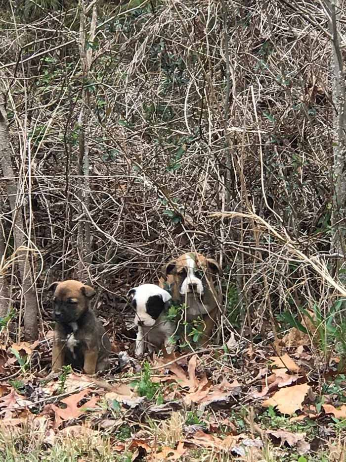 Cachorros abandonados en un vertedero