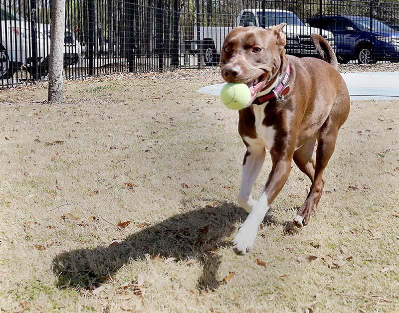Caitlyn juega con su pelota