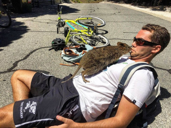 Campbell Jones y el amigable quokka