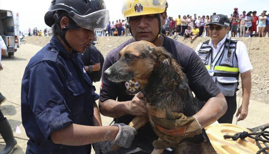 Conmovedor rescate de un perro en inundacion