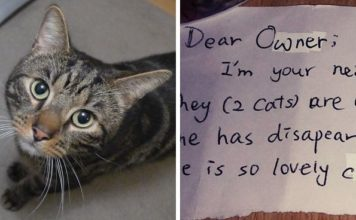 Descubrieron la vida secreta de su gato fallecido gracias a una nota