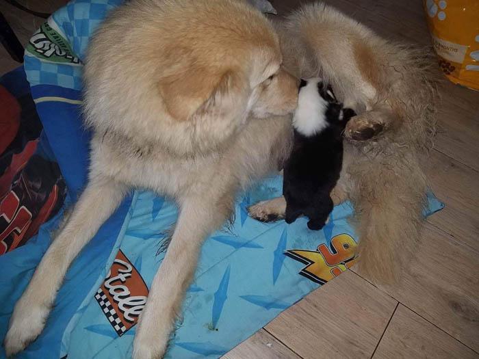 Ella los cuida con mucho amor