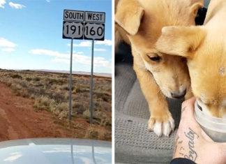 Encontraron cachorros abandonados en el desierto