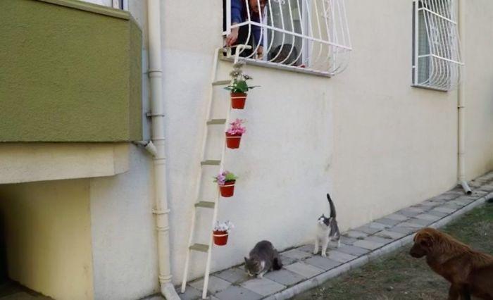Escalerilla para gatos sin hogar