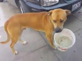 Escasez de agua en Perú y un perro carga su balde