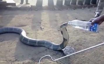 cobra sedienta fue a un pueblo indio en busca de agua