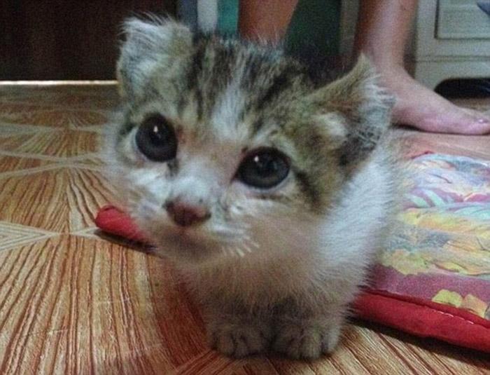 Esta gata de un mes de edad fue víctima de unos abusivos