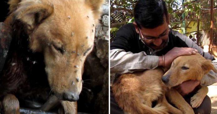 Esta perra estaba atrapada en una alcantarilla y tenía una terrible herida