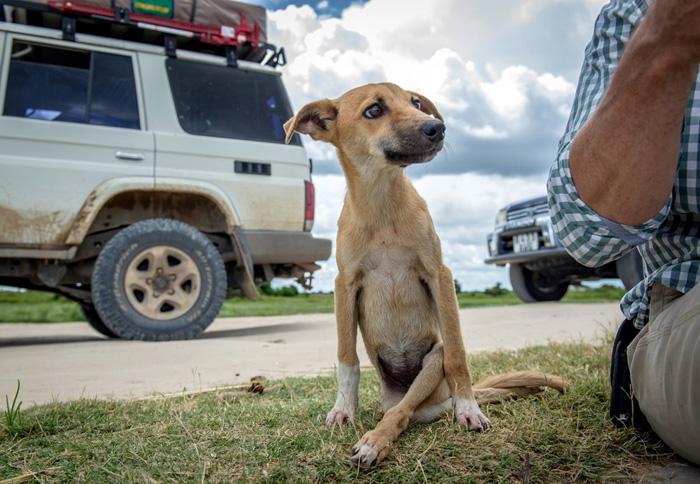 Esta perra parapléjica se arrastró por millas