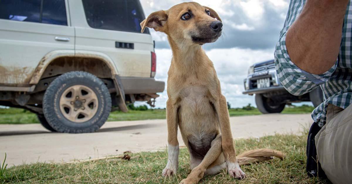 Esta perra paralizada tuvo que arrastrarse por millas para encontrar ayuda