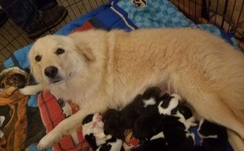 Esta perra perdió a sus cachorros en un incendió y adoptó a unos huérfanos
