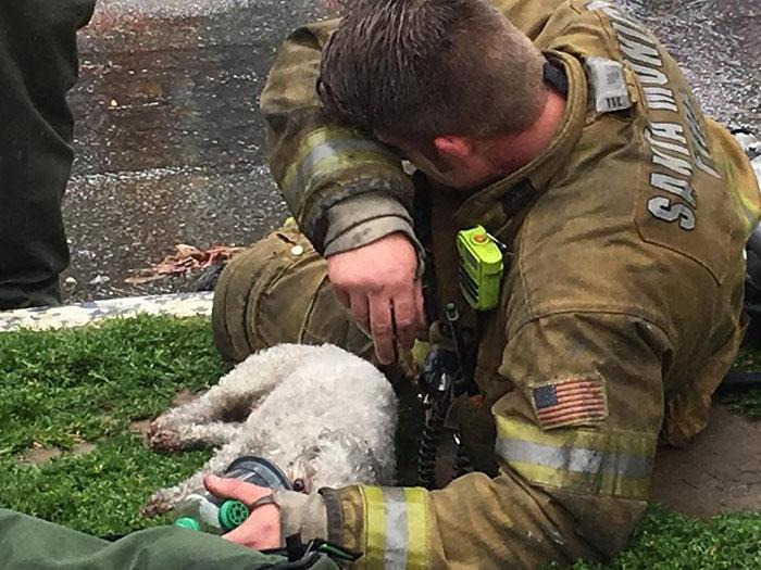 Este bombero salvó la vida de un perro inconsciente