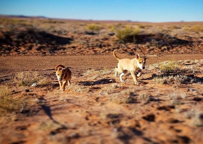 Este par de cachorros fueron encontrados a un lado de la carretera