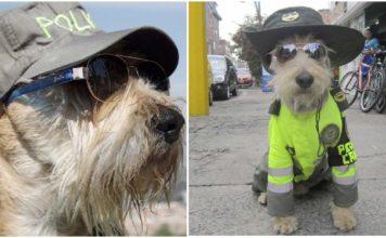 Este perro es el oficial de policía más lindo