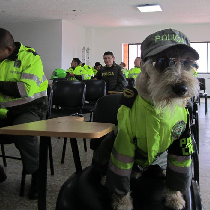Este perro es un oficial de la policía colombiana