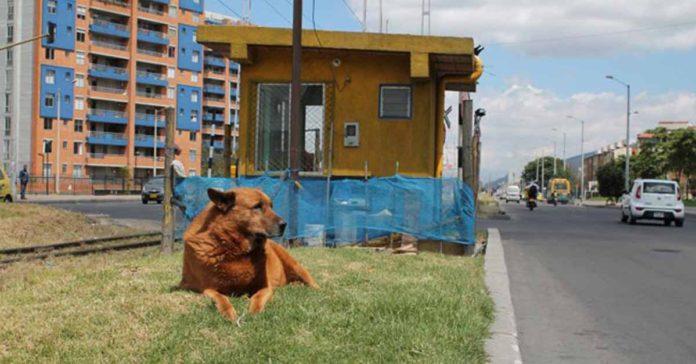 Este perro espera a su familia en las vías del tren desde hace casi 10 años