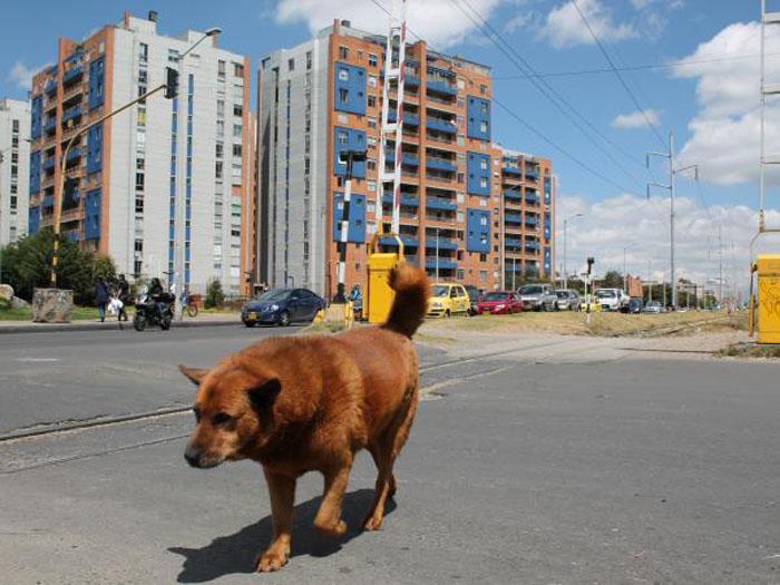 Este perro espera a su familia en las vías del tren