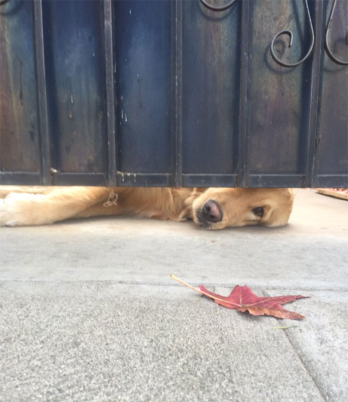 Este perro espera a una chica después de la escuela