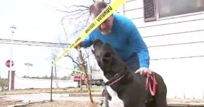 Este perro rescatado salvó la vida de su padre adoptivo en un incendio