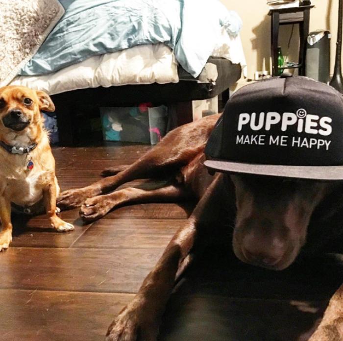 Estos perros son grandiosos