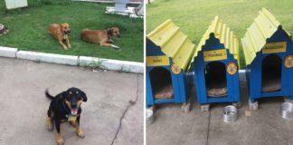 Estos tres perros trabajan en una gasolinera y son inseparables