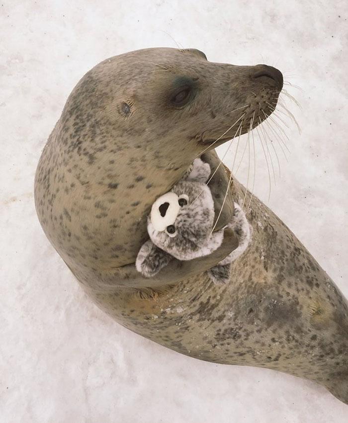 Foca abraza a un juguete que se parece a ella