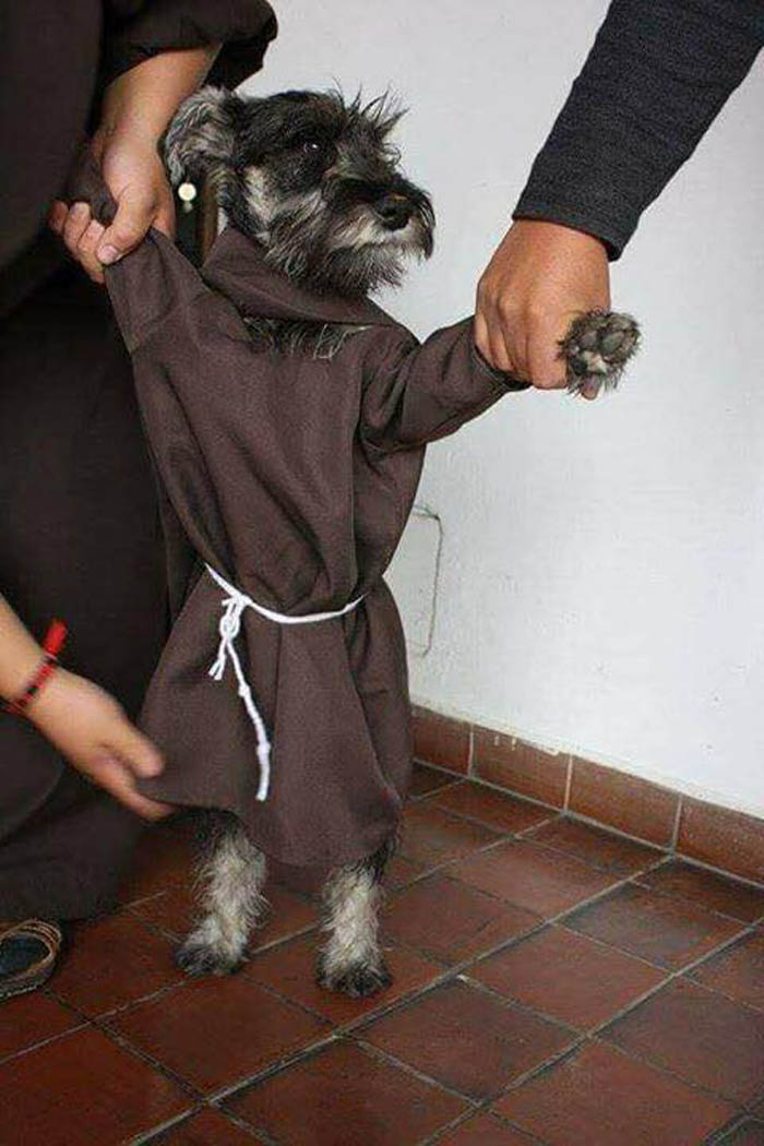 Fray Bigoton tiene un hábito de monje
