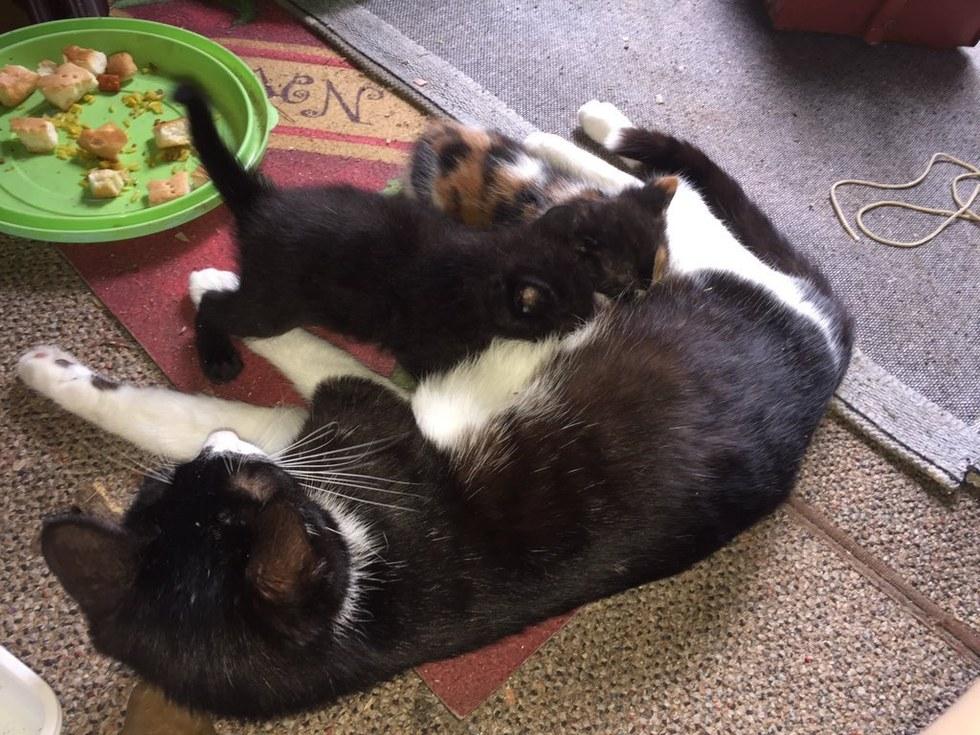 Gata y sus gatitos