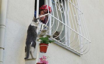 Gato usando escalera