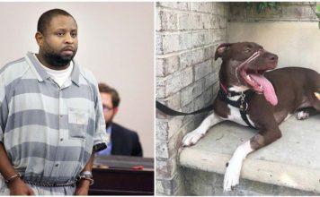 Hombre que ató el hocico de caitlyn es sentenciado