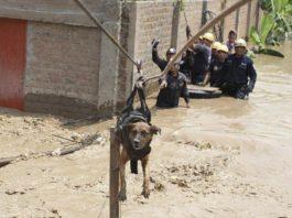 Impresionante rescate de un perro en Perú